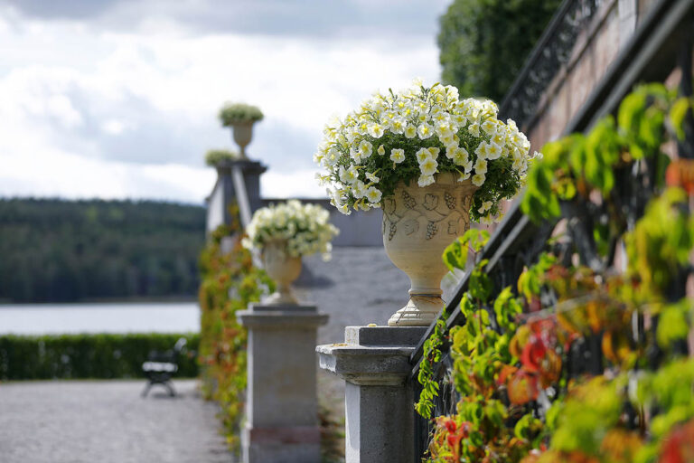Urnor med blommor vid trappa/Yellow flowers in pots