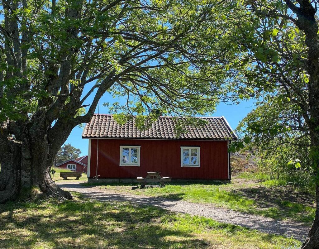 Röd stuga vid träd/red cottage under a tree