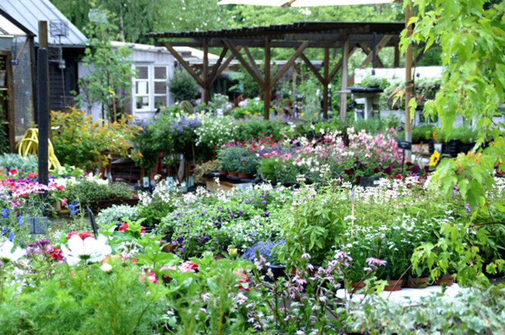 Växter i handelsträdgård/Plants in a commercial garden