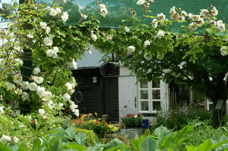 Växter i trägårdshandel