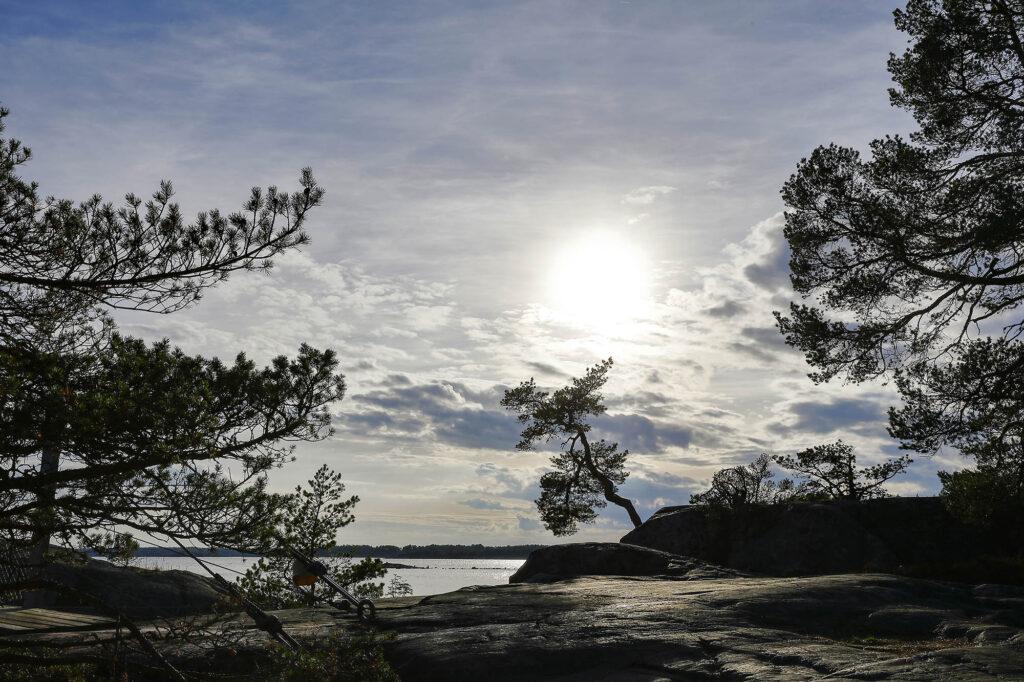 Träd och klippor vid hav