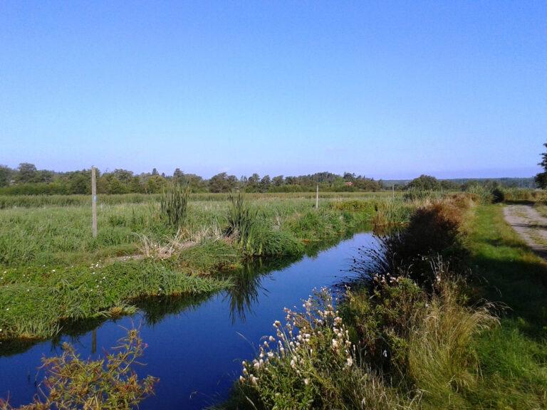 Våtmark en solig dag