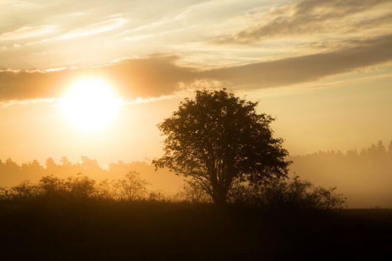 Sol i motljus en höstmorgon/sunrise in autumn.